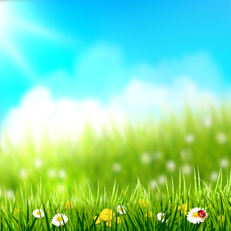 Spring background. Grass with flowers in front of a sunny meadow.