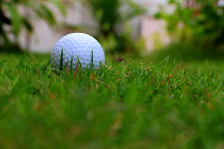 golf ball on sports golf course  Stock Photo