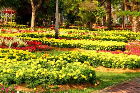 tagetes: Yellow Flower, Marigold Stock Photo