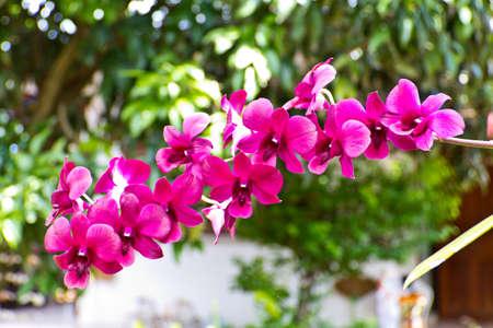 Beautiful purple orchid - phalaenopsis