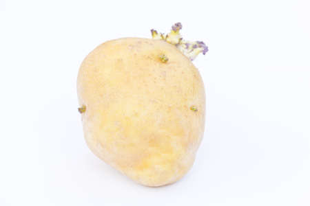 potato isolated on white background close up photo