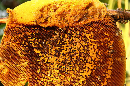 Honey from the hive making in honeycombs