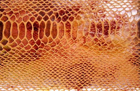 Close-up of snakeskin leather Stock Photo