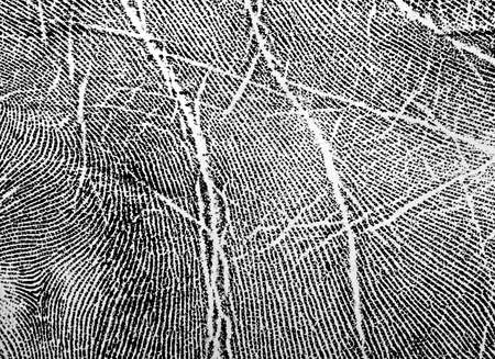 fingerprinted: Fingerprint on white paper