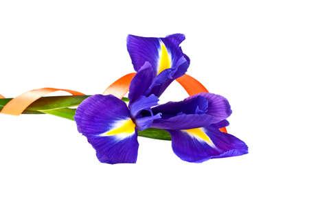 Blue iris or blueflag flower and orange ribbon isolated on white background