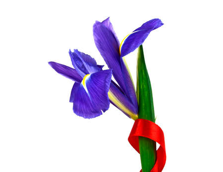 Blue iris and red ribbon isolated on white background