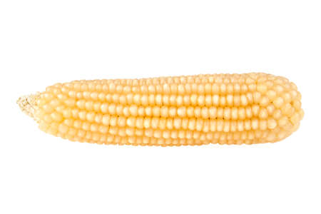 Ear of corn isolated on white background, corn for pop corn
