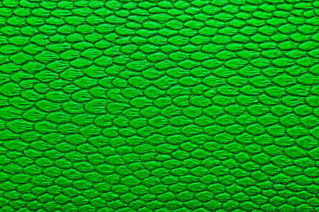 serpiente de cascabel: Snakeskin texture leather, can be used as a background Foto de archivo