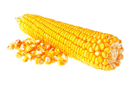 kernel: Fresh corn with kernel, isolated on a white background Stock Photo