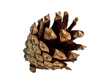 Christmas tree pine cones isolated on white background