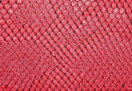 constrict: Snake skin, can use as background