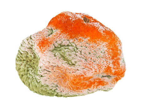 Rotten mandarin on a white background Stock Photo