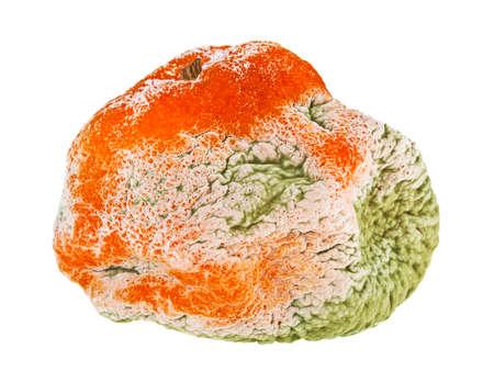 Rotten mandarin on a white background Stock Photo