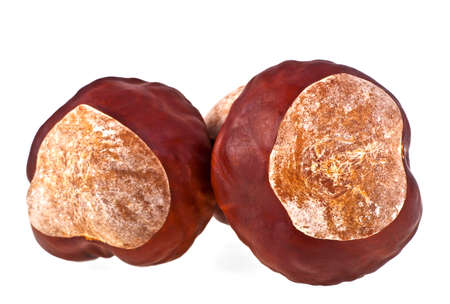 horse chestnut seed: Chestnuts on a white background