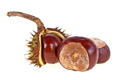 conkers: Chestnut on a white background