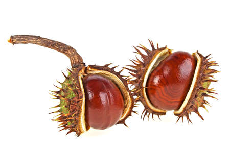 horse chestnut seed: Chestnut on a white background