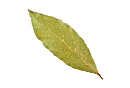dry leaf: Aromatic dry bay leaf isolated on a white background Stock Photo