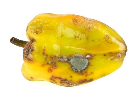 perish: Rotten yellow bell pepper isolated on white background