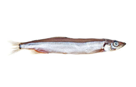 coldblooded: Capelin fish isolated on white background