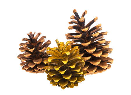 Christmas pine cones on a white background