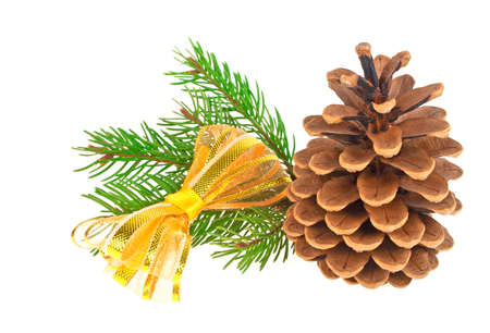 Pine cone with branch and golden bow on a white background