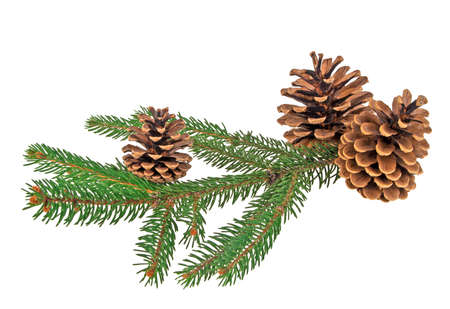 celebratory event: Branch of fir-tree and cone on a white background Stock Photo