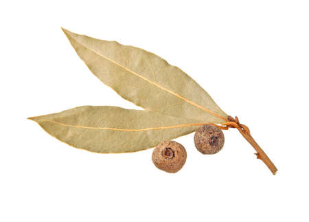 peppercorn: Dried bay laurel leaves and allspice isolated on a white background Stock Photo