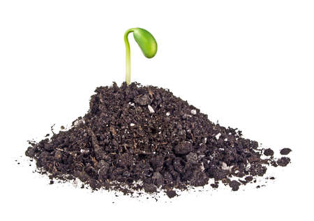 Young sprout of soy in soil humus on a white background Stock Photo