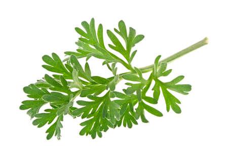 sagebrush: Sagebrush sprig isolated on white background Stock Photo