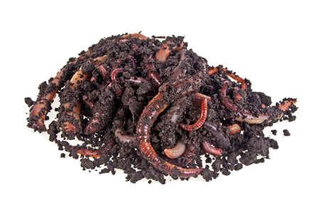 Worms sur un fond blanc Banque d'images - 76567172