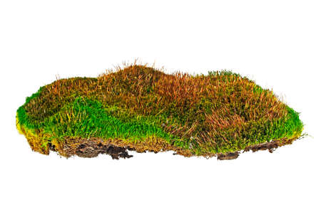 bakground: Forest moss on a white background