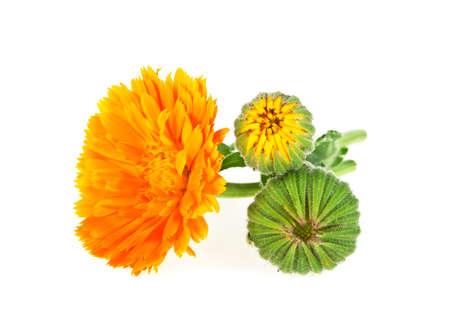 Calendula flowers. Bouquet isolated on a white background.