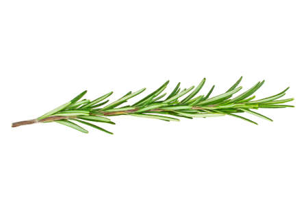 Single fresh rosemary twig isolated on white background Stock Photo