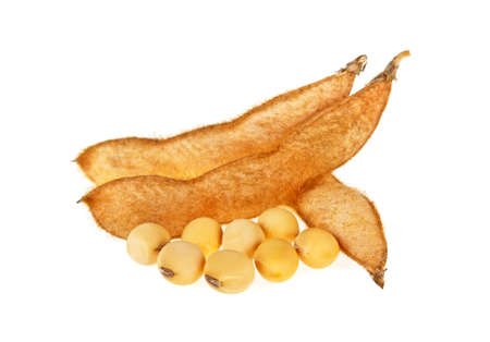 soya bean: Soybeans and seeds isolated on a white background Stock Photo