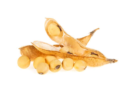 Soybean pods isolated on white background. Soya - protein plant for health food.