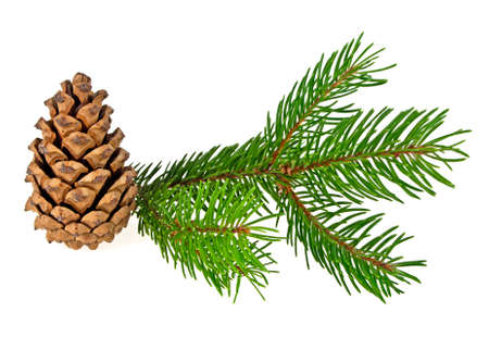 Branch of fir-tree and cone on white background, close up