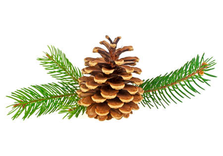 Christmas decoration - pine cone and branches