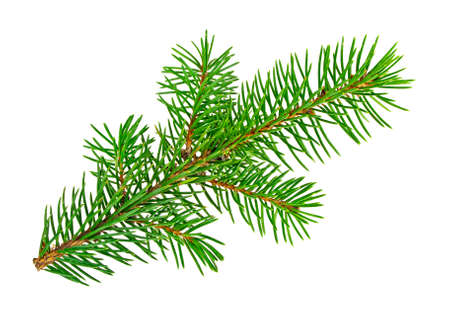 christmas backgrounds: Fir tree branch isolated on white background Stock Photo