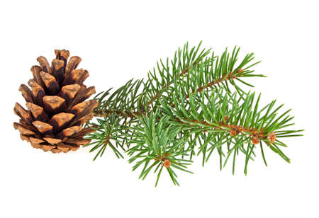 christmas backgrounds: Spruce twig with cone isolated on a white background. Christmas decoration. Stock Photo
