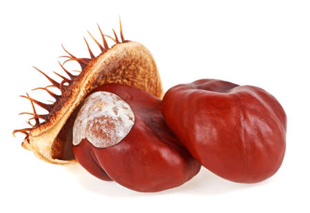 horse chestnut seed: Horse-chestnut fruits isolated on a white background, Aesculus Stock Photo