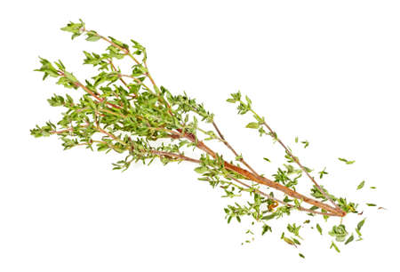 Sprig of thyme isolated on a white background Stock Photo