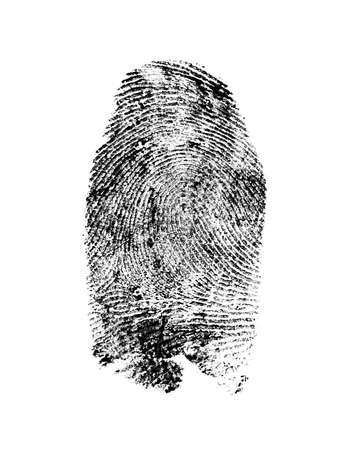 Fingerprint pattern isolated on white background