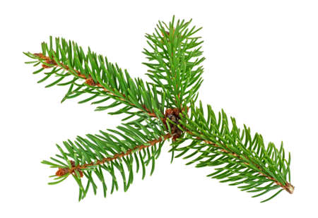 Closeup of fir branch isolated on white background Stock Photo