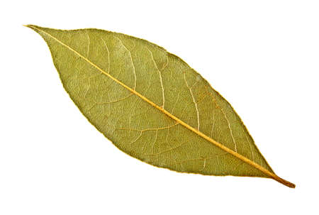 Dried bay leaf on white background Stock Photo