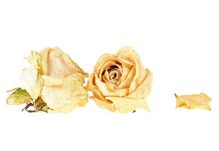 Dried white roses and petal on white background