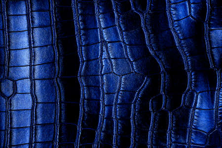 Blue crocodile leather texture, as background