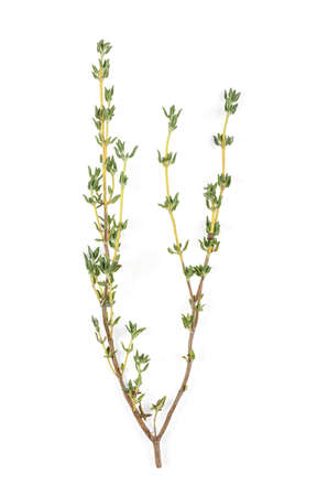 Sprig of fresh thyme isolated on white background. Top view.