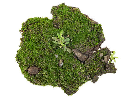 Green moss on white background, top view. 写真素材 - 121111070