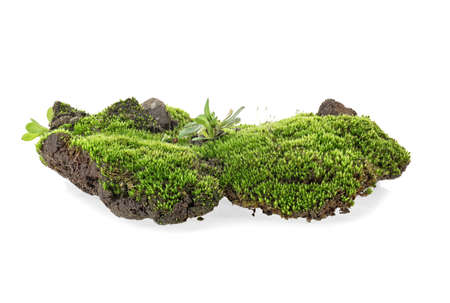 Moss isolated on a white background 写真素材 - 121113378