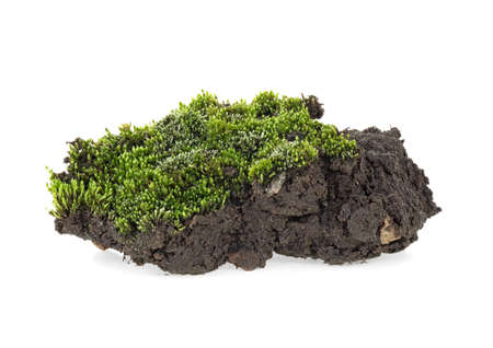 Green moss with grass on pile of soil, white background.